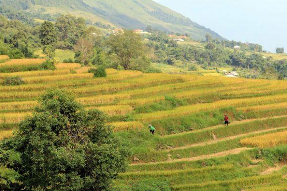 1-Day Trekking From Sapa: 18km Off The Beaten Track Hard Trek